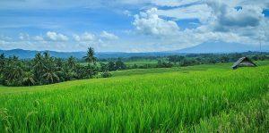 Hamparan sawah/Foto via flicker