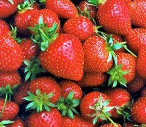 Ilustrasi hasil petikan buah segar stroberi dari Vins Berry Park / Ilustrasi nusantaranews / Foto panduanwisata