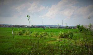 Tanah dijual kota sumenep/Foto AS/Nusantaranews