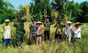Program Pendampingan Ketahanan Pangan Digalakan oleh Babinsa Pecoro dan PPL/Foto nusantaranews