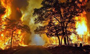 Kebakaran Hutan/Foto nusantaranews (Istimewa)