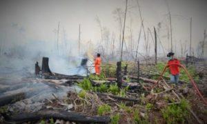Kebakaran Lahan di Kampar/Foto nusantaranews (Istimewa)