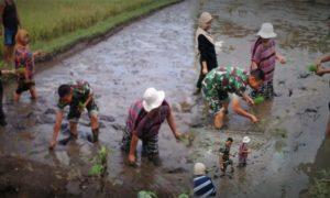 Babinsa Silo Bersama PPL Lakukan Pendambingan Intensif Pok Tani Nuzu/Ilustrasi Foto nusantaranews