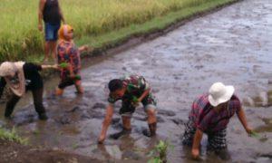 Babinsa dan PPL lakukan Pendampingan Intensif/Foto Sis24