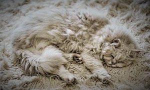 Kamuflase Kucing Ajaib/ Foto via London Media