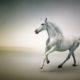 Kuda Putih/Foto nusantaranews via Seni Rupa