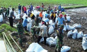 Koramil 0824/23 Bersama Masyarakat Benahi Dinding Irigasi/Foto Sis24