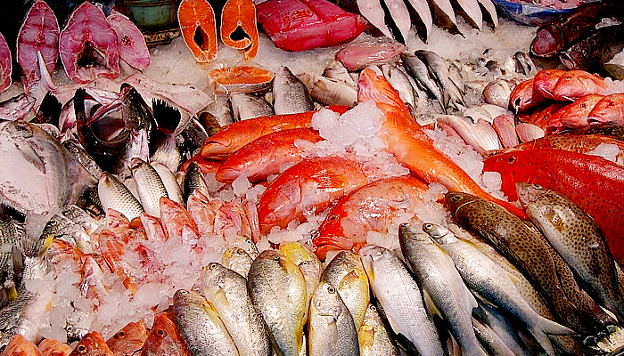 Konsumsi ikan laut ampuh cerdaskan otak.