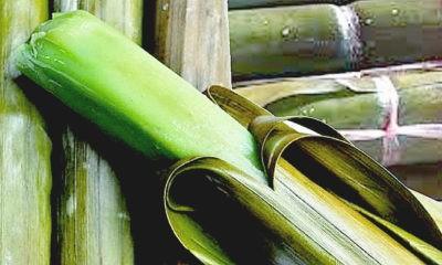 Berburu Pupudak kuliner khas Banjarmasin.
