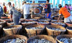 Tempat pelelangan ikan hasil penangkapan dari laut. Foto Ilustrasi