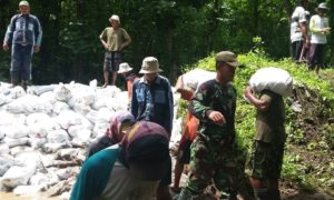Danramil 0824/23 Wuluhan bersama KA UPT Pengairan Wuluhan dan masyarakat melakukan perbaikan tanggul. Foto Sis/Nusantaranews