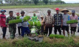 PPL, Babinsa, bersama poktani jember lakukan pendampingan. Foto sis/Nusantaranews