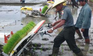 Kasdim dan Bupati Trenggalek Jajal Mesin Tanam Rice Transflanter. Foto prspen/Nusantaranews