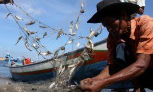 Seorang nelayan tampak sedang memungut ikan hasil tangkapannya. Foto via nasionalisme/ilustrasi
