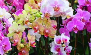 Bunga Anggrek/Foto: Satu Jam (Istimewa)