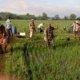 (Ilustrasi) Babinsa Koramil 0807/16 Karangrejo Bersama Kelompok Tani Semprot Hama Wereng/Foto Penrem081