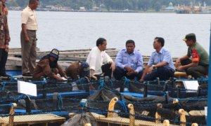 Presiden Joko Widodo dalam atu rangkaian kegiatan kunjungan kerjanya di Ambon/Foto: Dok. Istimewa