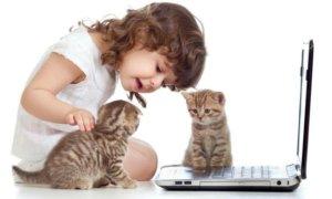 Manfaat memlihara kucing/Foto Istimewa/Nusantaranews