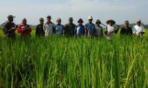 Para petani di Jember Kendalikan Hawa Wereng Secara Massal/Foto Dok. Pribadi