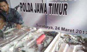 Polda Jatim Ungkap Ilegal Fishing/Foto Tri Wahyudi