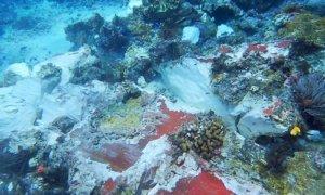 Kondisi Karang Raja Ampat yang rusak akibat tubrukan Kapal Pesiar Inggris/Foto: Dok. DetikTravel
