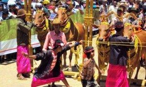 "Festival ""Sapi Sono"" Madura. Foto Fitri Ika Cahyani"