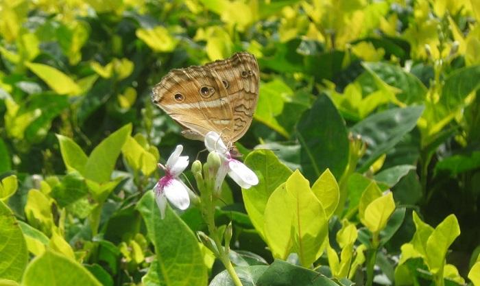 Kupu-kupu di daun-daun. Foto juara 1 Lukisan Cahaya Anak-anak SMP N 3 Penebel. (smasta89.blogspot.co.id)