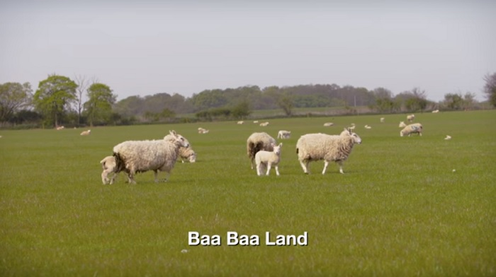 Baa Baa Land, calon film paling membosankan. Foto Crop: Trailer Baa Baa Land/ YouTube