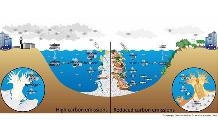 Indonesia Miliki Potensi Besar Kembangkan Ekosistem Karbon Biru (ilustrasi). Foto: Dok. www.barrierreef.org