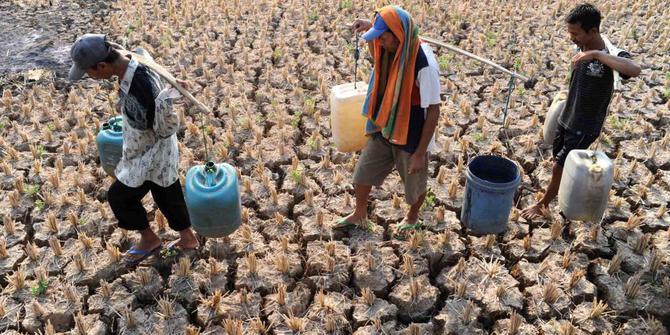 Kekeringan Melanda/Foto Ilustrasi/Merdeka/Nusantaranews