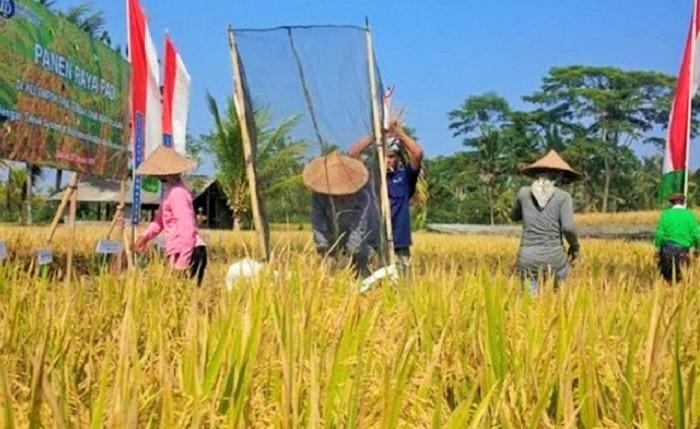 Para petani Subak Guama, Bali. Foto: Dok. Agritani