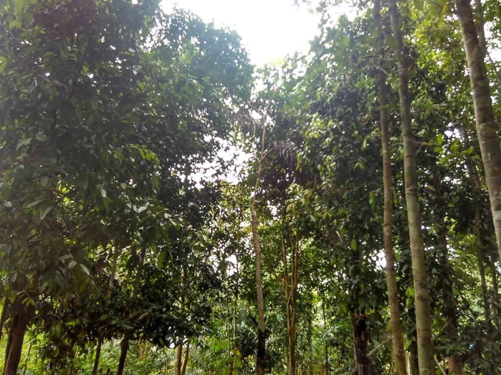 Menurut peneliti, cara terbesar untuk memperlambat perubahan iklim adalah dengan menanam lebih banyak pohon dan menghentikan deforestasi, karena pohon menyerap sejumlah besar karbon dari atmosfer. (Foto: Eriec Dieda/NusantaraNews)