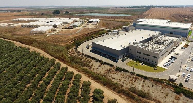 Breath of Life Pharma (BOL) akan membuka pabrik ganja medis terbesar di dunia di Israel tengah. Foto: Bol Pharma)