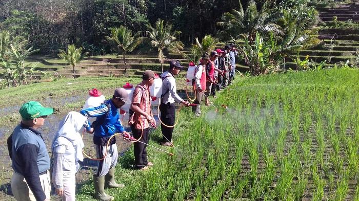 TNI-Petani Ponorogo Lakukan Gerakan Penyemprotan Massal POC. Foto Muh Nurcholis/ NusantaraNews