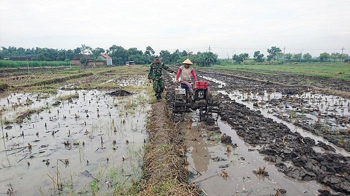 Pendampingan Tanam Padi dan Pengolahan Lahan oleh Koramil Puri. Foto Dok. Penrem 082/CPYJ/ NusantaraNews