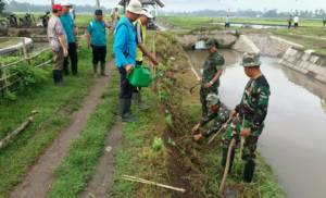 ADanramil 0824/23 Jember Kaptern Arm Pujianto saat menanam bunga refugia membantu petani. Foto: Sis/Istimewa