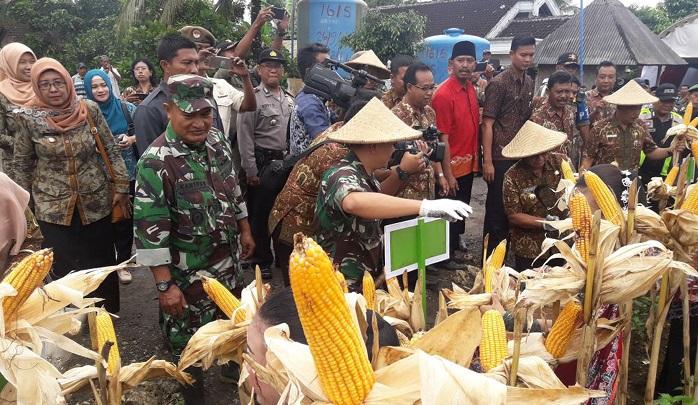 Panen raya jagung APBN 2017 dan tanam serentak Kedelai APBN-P 2017, Kamis (25/01/2018). Foto Amrin08/ NusantaraNews