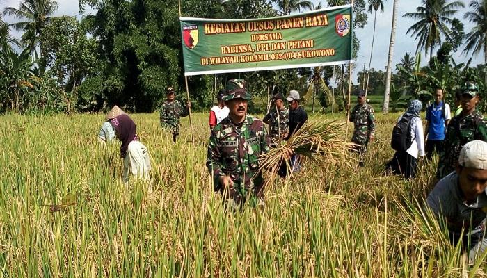 Danramil Sukowono Kapten Inf Jarwo Adi Purnomo bersama 7 orang anggotanya dan PPL se-Kecamatan Sukowono yang turun kesawah milik H Alfan seluas 600 hektar. Foto: Istimewa