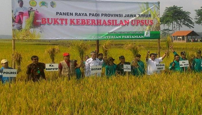 Panen Raya Padi di Tulungagung. Foto: Istimewa/Dok.NusantaraNews