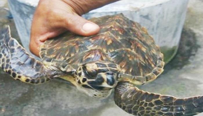 Seorang warga Kepulauan Selayar menyelamatkan nyawa seekor Penyu. Foto: Fadly Syarif/NusantaraNews