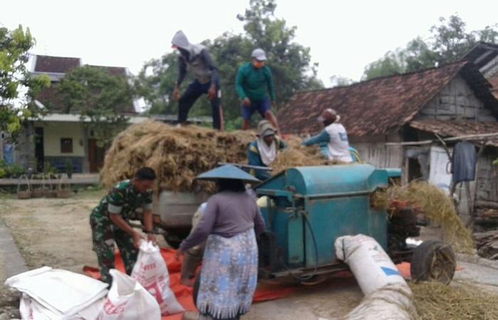 Anggota kelompok tani Margo mulyo membantu panen padi jenis Ciherang seluas 2,5 rante milik Wardoyo. (Foto: Istimewa)