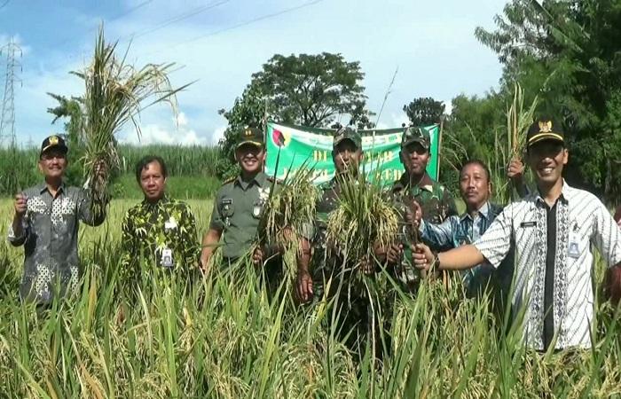 Kediri akan memanen padi di lahan seluas 7,2 hektare. (Foto: IStimewa)
