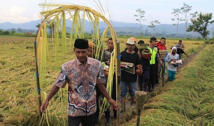 Tradisi Petik Padi Blitar (Foto Nusantaranews.co/Rantelino)