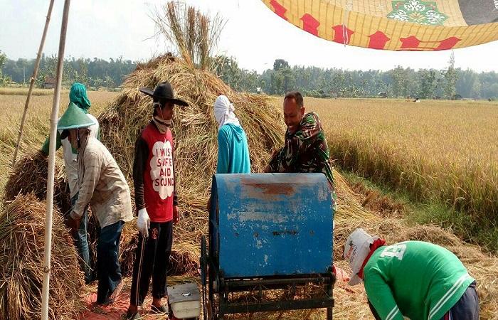 Personel TNI memantau panen raya padi petani di Ponorogo. (Foto: Muh Nurcholis)