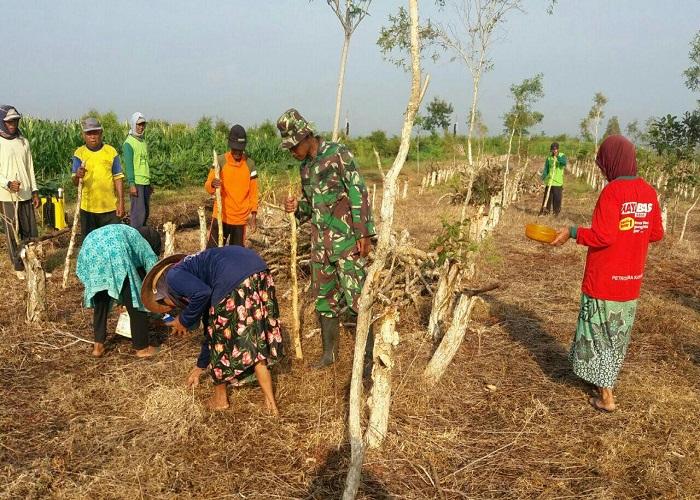 TNI Ponorogo membantu petani menanam kedelai. (Foto: Muh Nurcholis)
