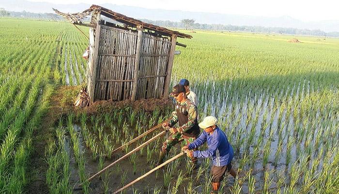 Anggota TNI membantu petani Ponorogo membajak sawah sebagai wujud nyata kerja membantu para petani, Rabu (18/4/2018). (Foto: Much Nurcholis/NusantaraNews)