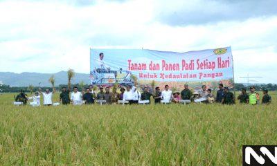 Panen raya padi di lahan pertanian di Bojonegoro, JAwa Timur tahun 2018. (Foto: Dok. NUSANTARANEWS.CO)