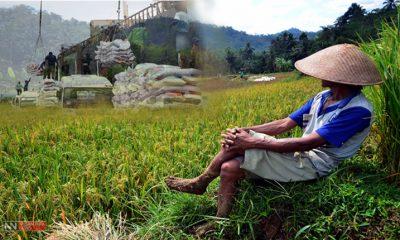 Impor beras dan Petani Indonesia (Ilustrasi Nusantaranews)