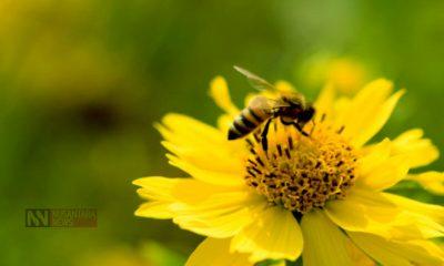 Ratu Lebah, Bunda. (FOTO: NUSANTARANEWS.CO)