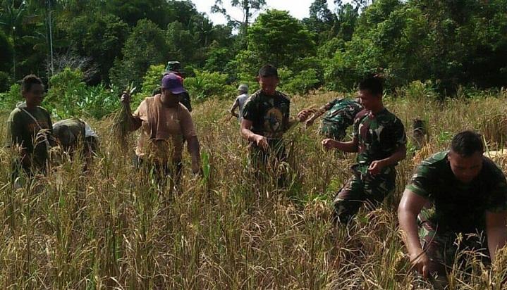 Kelompok Tani dan Satgas Raider 500/Sikatan Tanam Padi Bersama. (FOTO: NUSANTARANEWS.CO/SW)